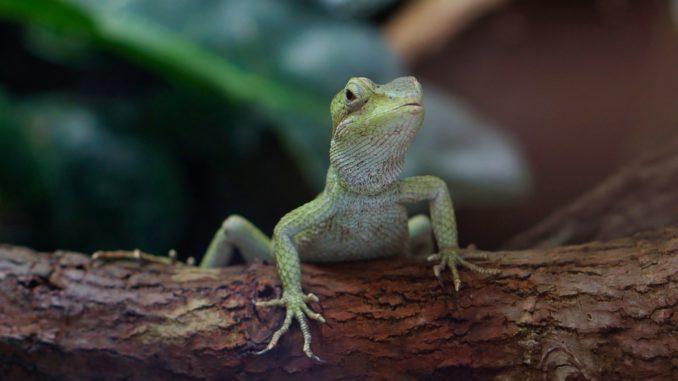 terrarium gecko