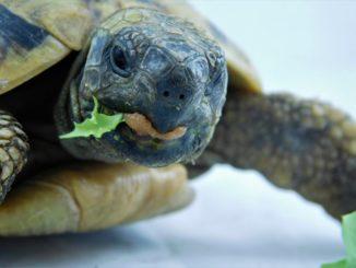 terrarium schildkröte