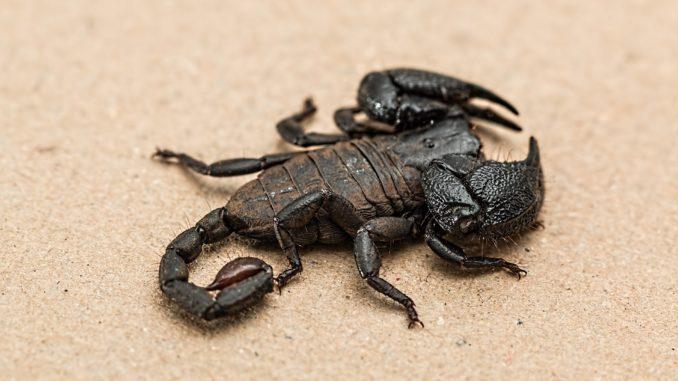 Skorpion Terrarium
