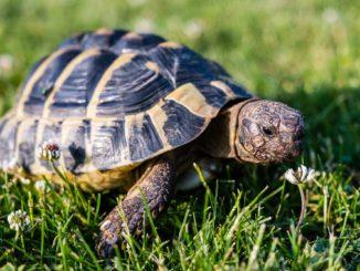 Landschildkröte Terrarium