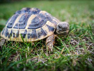 Landschildkröten Terrarium